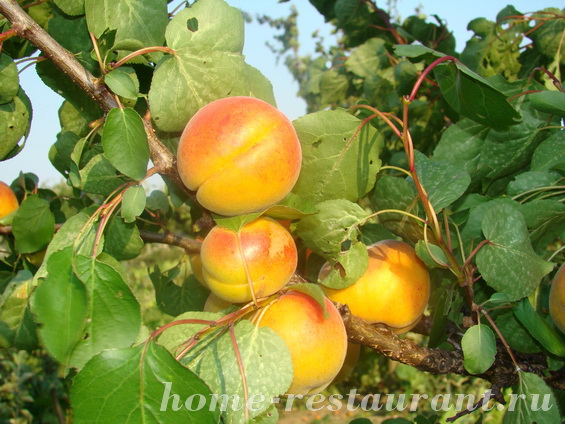 Абрикосовый компот на зиму с апельсином