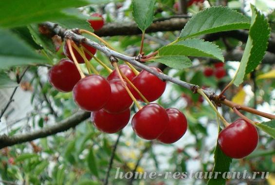 Заготовки из вишни на зиму фото